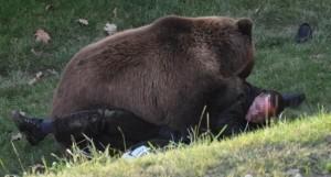 Bărbat din Măneciu atacat de urs în munții Ciucaș