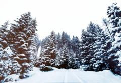 Alertă de la meteorologi! COD GALBEN de ninsori și vânt puternic în toată țara
