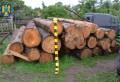 Lemn confiscat şi amenzi de 30.000 de lei aplicate de Garda Forestieră Ploieşti
