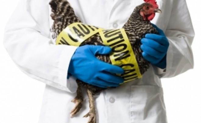 ALERTĂ de sănătate: Gripa aviară, în România