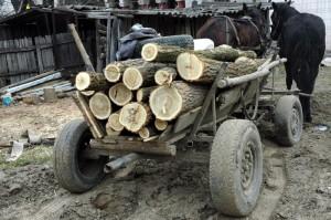 Prinşi în flagrant la furat de lemne