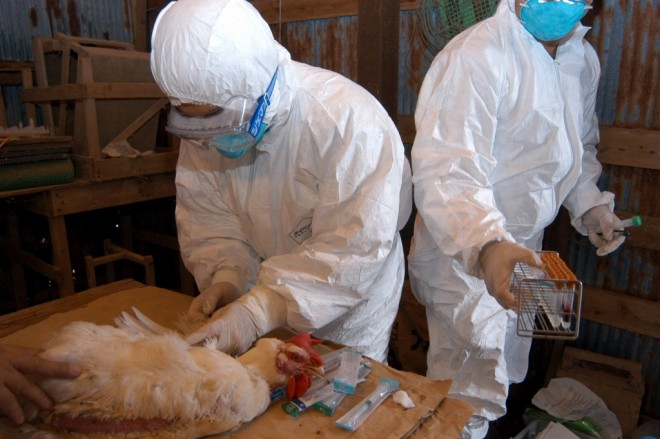 ALERTĂ! Suspiciune de gripă aviară în Loloiasca
