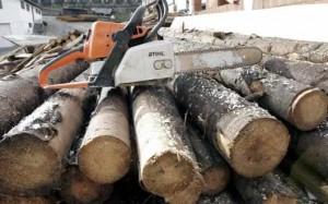 Prins în flagrant la furat de lemne
