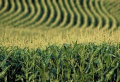 Cine sunt străinii care controlează producția de cereale bio din România