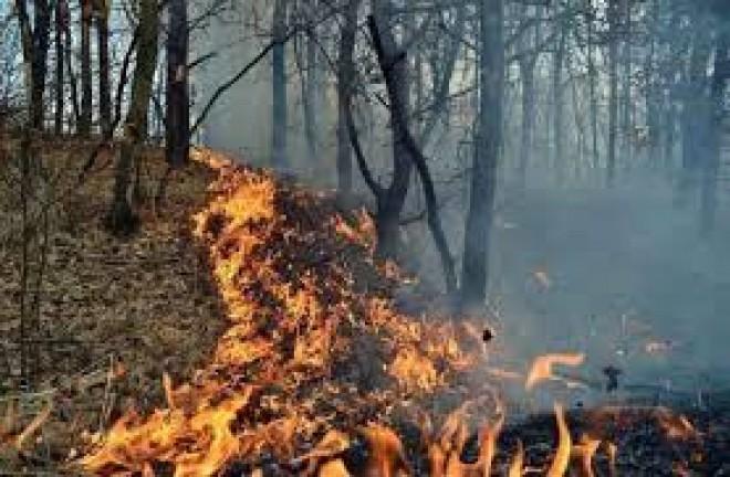UPDATE Incendiu de PROPORŢII la Măgureni! Ard trei hectare în PĂDURE
