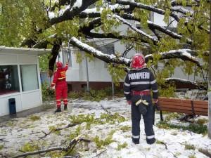 Intervenţie a pompierilor la Spitalul Voila! Un copac secular stă să cadă pe o clădire- FOTO