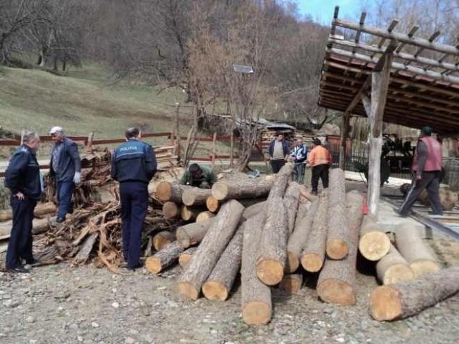 Polițiștii prahoveni au confiscat peste 13 m3 de lemne, în urma unui control