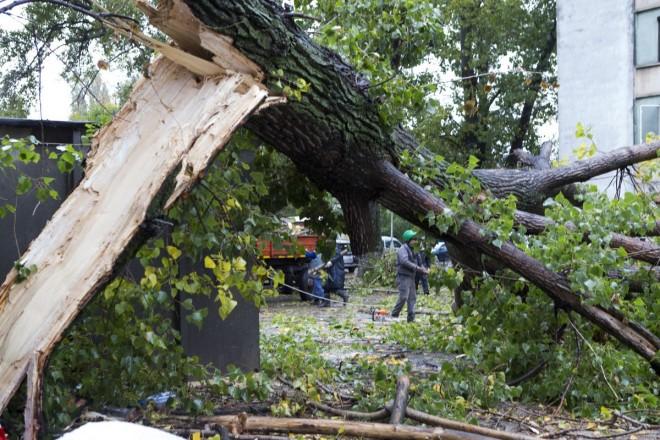 Pom de 15 metri înălţime, căzut pe o stradă din Ploieşti
