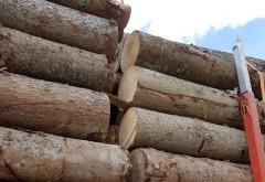 Prins de jandarmii prahoveni în timp ce vindea ilegal lemne