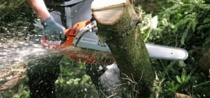 Prins la furat de lemne din pădurea de la Vâlcăneşti