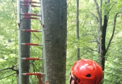 UPDATE Parapantist blocat intr-un copac, intre Stana Regala si Sinaia- FOTO