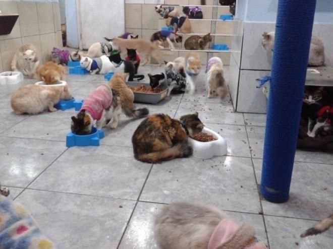 20 de pisici si 3 caini, intr-un apartament din Ploiesti! Politistii au dat amenda tinandu-se de nas!