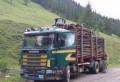 Transport ILEGAL de material lemnos, interceptat de jandarmii prahoveni