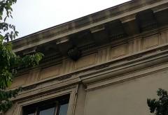 Jandarmii si un apicultor, chemati sa distruga doua cuiburi de VIESPI, la Palatul Culturii din Ploiesti