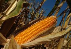 DEZASTRU în agricultură din cauza temperaturilor extreme. Cum afectează canicula culturile de legume, porumb, floarea-soarelui şi soia