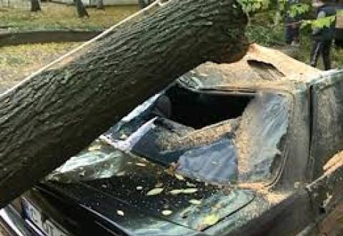 Vantul face ravagii in Prahova! Un copac a cazut peste o masina, la Albesti