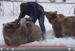VIDEO VIRAL/ Prima ninsoare de anul acesta, la munte. Doi URSI se joaca in ZAPADA cu un TURIST!!!