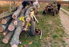 Un barbat din Inotesti, amendat pentru ca transporta lemne fara acte de provenienta