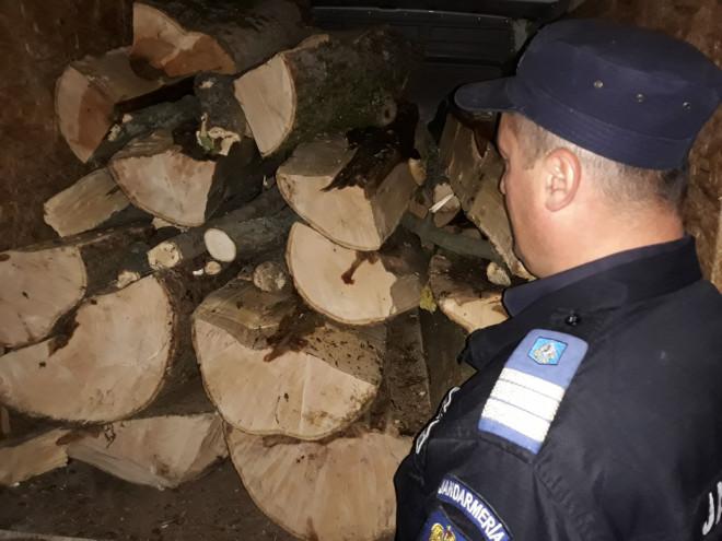 Doi prahoveni au crezut ca au descoperit metoda geniala prin care sa acopere furtul de copaci. Din pacate...