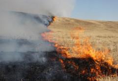 Arde miristea, la Bucov! 1000 mp de vegetatie, cuprinsi de flacari!