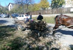 Bărbaţi amendaţi pentru furt de lemne în zona Filipeşti
