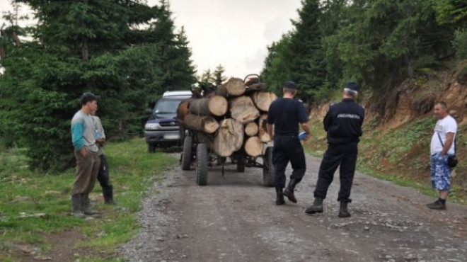 Nu se invata minte! Amenzile curg, dar hotii de lemne continua sa defriseze padurile din Prahova