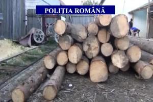 Prahova: Opt suspecţi, audiaţi după percheziţiile în două dosare de tăiere ilegală şi sustragere de material lemnos