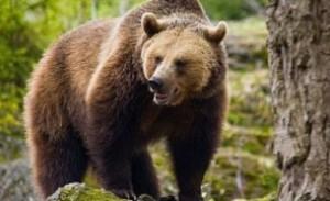 ULUITOR: O femeie a fost mușcată de urs, în timp ce încerca să își facă selfie cu animalul înfometat