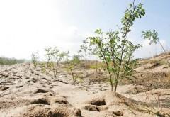 Curtea Europeană de Conturi: Sudul țării, în pericol să devină un deșert