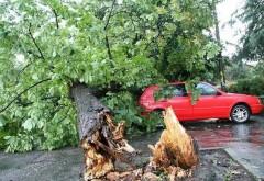 Masini avariate in Ploiesti, de un copac rupt de vant, pe strada Cameliei