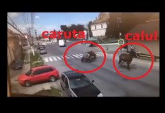 Scene incredibile filmate in Ploiestiul anului 2018! Un cal scapa de la caruta si o ia la fuga pe strada