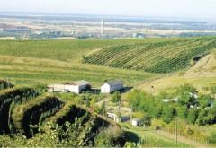 Zeci de localitati prahovene, incluse in 5 centre viticole. Vezi lista completa