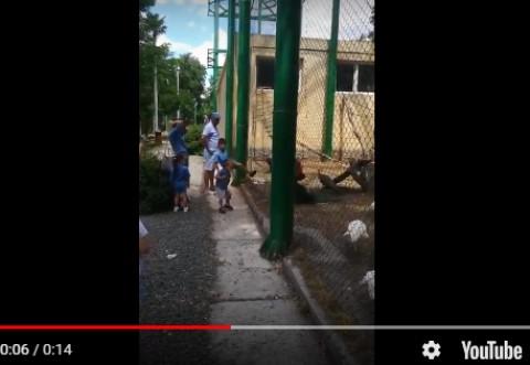Familie de melteni la Zoo Bucov. Parintii se uita cum copiii lovesc pasarile cu picioarele/ VIDEO