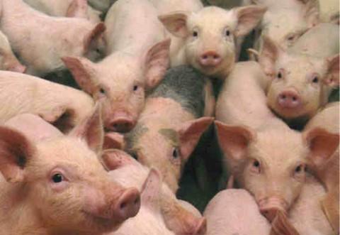 Vânzarea animalelor vii, interzisă in târgurile din Prahova