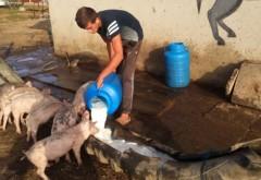 Viorica Dăncilă anunță alocarea a 200 de milioane de lei pentru fermierii afectați de pesta porcină: Banii sunt pentru despăgubiri și achiziții dezinfectanți