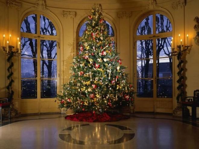 Cel mai FIŢOS BRAD. Cele mai SEXY ploieştence care s-au pozat lângă pomul de Crăciun FOTO