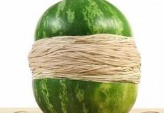 SENZATIE!!! Ce se întâmplă dacă înfăşori un pepene cu elastice de cauciuc. Rezultatul ŞOC al unui experiment