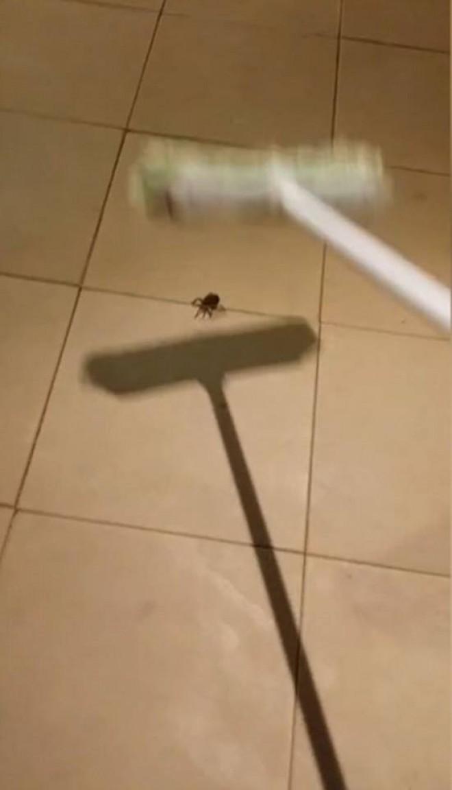 A vazut un paianjen pe gresie si a vrut sa il omoare! A avut un soc cand a vazut ce s-a intamplat dupa ce l-a lovit cu matura