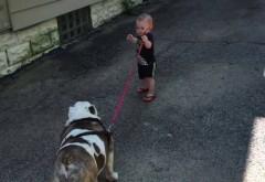 Pustiulica asta de cativa anisori a vrut sa-si scoata bulldog-ul lenes la plimbare. Reactia lui cand s-a suparat pe catel este geniala! Razi garantat la VIDEO de AICI