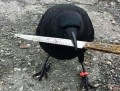 Fotografie virală pe net. Ce face această cioară cu cuţitul te va lăsa mască