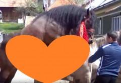 Extraordinar! Filmuletul cu imperecherea a doi cai superbi din Ardeal are MILIOANE de vizualizari. Ce se intampla in imagini de toata lumea se uita! Sigur n-ai mai vazut asa ceva! VIDEO