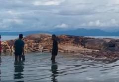 DESCOPERIRE MILENARA! O creatură gigantică, neştiută de oameni, a apărut pe o plajă din Indonezia - FOTO/VIDEO