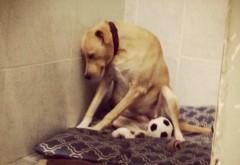 """""""Cel mai trist câine din lume"""", abandonat din nou. Povestea emoţionantă a Lanei, o căţeluşă fără noroc"""
