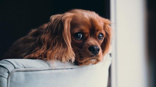 Un veterinar i-a dat din greșeală unui cățeluș o injecție letală. La scurt timp i-a sunat pe stăpâni, iar ce le-a propus întrece orice imaginație