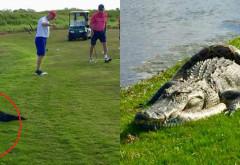 Batalia anului s-a dat pe terenul de golf! Un crocodil se lupta pe viata si pe moarte cu un piton urias