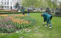 Nesimtirea de primavara: Ploiesteni, prinsi de Politie in timp ce furau florile de pe Bulevard