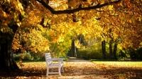 PROGNOZA METEO: Temperaturi de primăvară la sfârşitul lunii octombrie