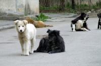 Cainii maidanezi din Ploiesti nu vor mai fi eutanasiati!