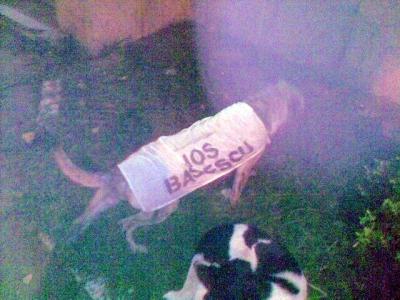 Câini vagabonzi, branduiţi cu mesaje antiBăsescu