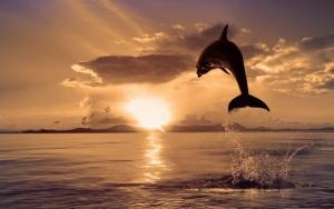 Cat costa sa adopti un delfin